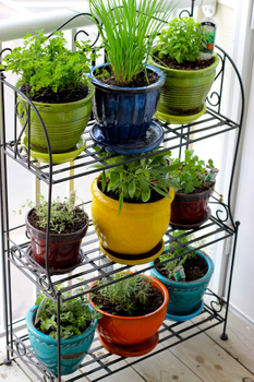 Create a herb garden from an old vegetable rack